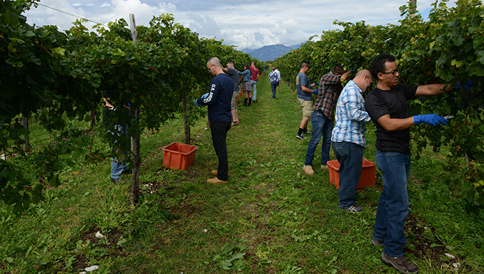 Grapes bring Team Aviano, locals together